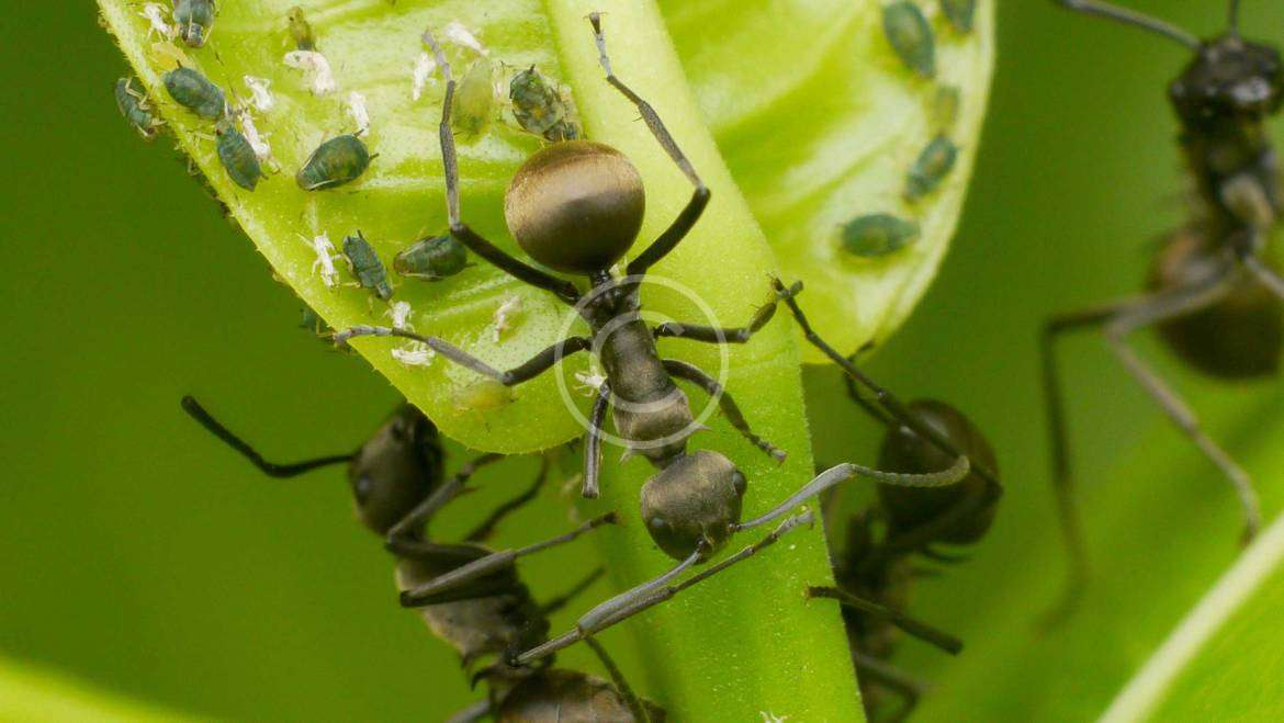 , How To Clean and Evict Dangerous Insects