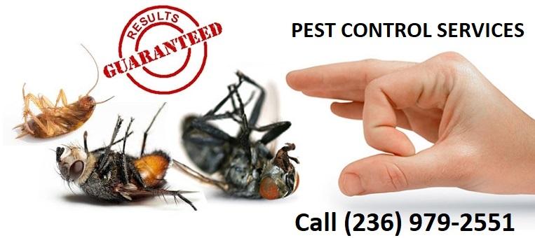 Pest Control Langley, Langley pest control