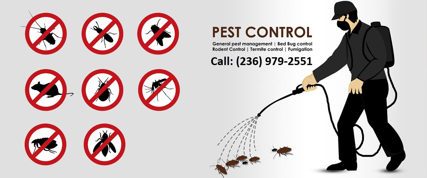 , Surrey Pest Control