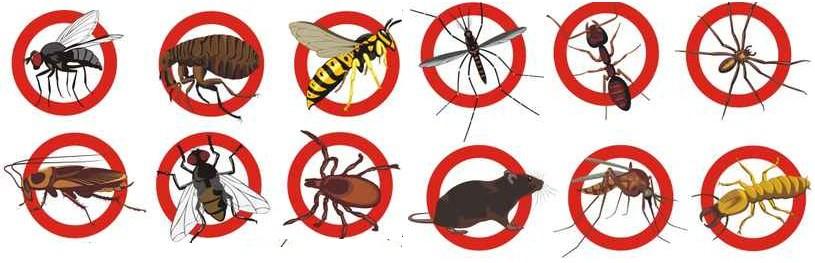 , Vancouver Pest Control