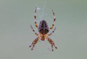 Pest Control Surrey, Home 1